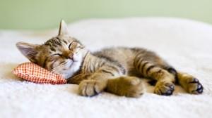 kissa nukkuu 2